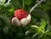 Mini bolas del queso de la mozzarella, tomates de cereza y albahaca verde fotos de archivo libres de regalías