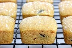 Mini bolos em uma cremalheira refrigerando Imagem de Stock Royalty Free