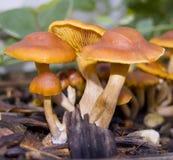 Mini bosque Foto de archivo libre de regalías