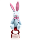 Mini Bunny In Chair Stock Images
