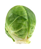 Mini Cabbage Head Royalty Free Stock Images