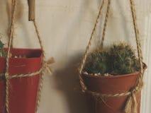 Mini Cacti de suspensão com a Rosa seca na porta de madeira branca - jardim IdeaHanging Mini Cacti do vintage com a Rosa seca na  foto de stock royalty free