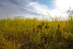 Mini Cacti i en Colorado trailhead Arkivbild