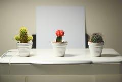 Mini cactus Stock Images