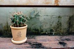 Mini Cactus Photographie stock libre de droits