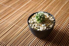 Mini cactus on bamboo screen. Japanese style. Royalty Free Stock Photo