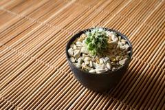 Mini cactus on bamboo screen. Japanese style. Royalty Free Stock Photo
