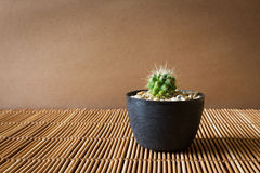 Mini cactus on bamboo screen. Japanese style. Royalty Free Stock Images