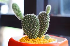 MIni Cactus dans le pot, dans la chambre photographie stock