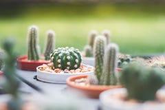 Mini cactus en el jardín y mini piedra Fotografía de archivo libre de regalías