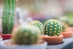 Mini cactus en el jardín y mini piedra Imágenes de archivo libres de regalías