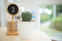 Mini Cactus en la tabla Foto de archivo