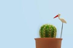 Mini Cactus met aigrette Stock Foto's