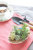Mini cactus and succulent garden on pink fabric in living room, Stock Photography