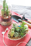 Mini cactus and succulent garden on pink fabric in living room, Royalty Free Stock Image