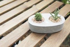 Mini cactus in vaso di pietra con la tavola dell'assicella fotografia stock libera da diritti