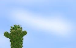 Mini Cactus vert contre le ciel bleu lumineux, avec l'espace libre pour le texte et la conception Images stock