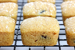 Mini Cakes on a Cooling Rack Royalty Free Stock Image