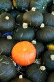 Mini calabaza en mercado Fotografía de archivo libre de regalías