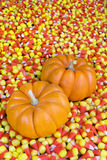 Mini calabazas en maíz de caramelo fotos de archivo