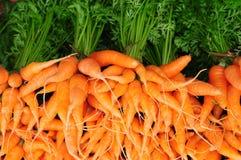 Mini carrots Stock Photography