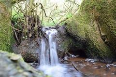 Mini cascade au-dessus des racines d'arbre Photographie stock