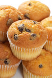 Mini Chocolate chip muffins Stock Images