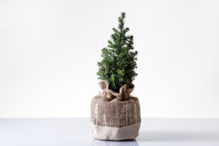 Mini christmas tree Royalty Free Stock Photography