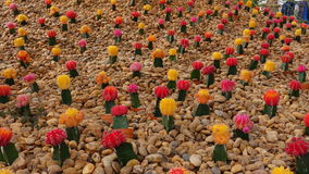 Mini color cactus. Royalty Free Stock Photography
