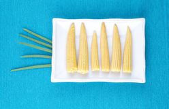 Mini corn, canned lies on a rectangular white plate on a blue ba Royalty Free Stock Photography