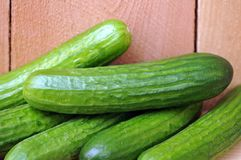 Mini cucumber Stock Photography