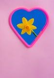 Mini Daffodil kondigt de Lente aan royalty-vrije stock fotografie