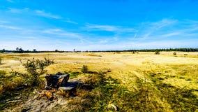 The mini desert Beekhuizerzand in the Hoge Veluwe nature reserve stock photo