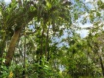Mini- djungel Arkivfoto