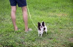 Mini dog and human legs. Mini dog with leg of human in park royalty free stock photos