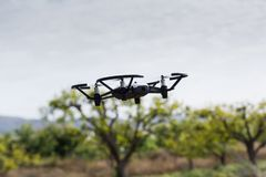 Mini drone flying in a greenhouse on a fruit trees crop. Also in agriculture, utility is sought for drones. To begin with, you have to set the flight techniques stock images