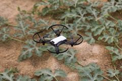 Mini drone flying in a greenhouse on a watermelon crop. Also in agriculture, utility is sought for drones. To begin with, you have to set the flight techniques stock photo