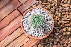 Mini-echinocactus dekorative Houseplants Kaktus, Draufsicht, Nahaufnahme lizenzfreies stockfoto