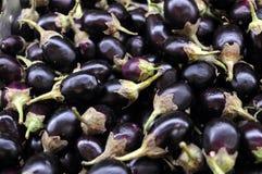 Mini eggplants Stock Images
