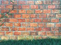 Mini erba di mondo e fico di strisciamento che cresce sul mattone arancio con il fondo del cemento fotografia stock libera da diritti