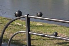 Mini escultura del metal de la foto animal del erizo del carácter de la familia en Uzhgorod Ucrania fotografía de archivo