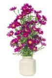 mini fleurs magenta de chrysanthemums Photographie stock libre de droits