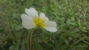 Mini flor fotos de archivo