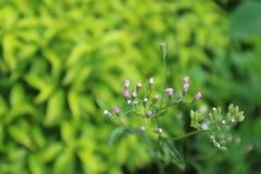 Mini flor Foto de archivo libre de regalías