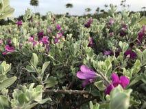 Mini flor fotos de archivo libres de regalías