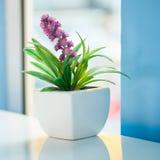 Mini flores Fotos de archivo libres de regalías
