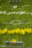 Mini flower football field Stock Photo