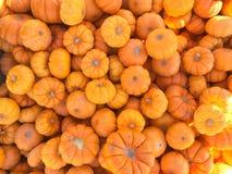 Mini fond orange lumineux de potirons photographie stock libre de droits