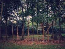 Mini foresta Fotografie Stock Libere da Diritti