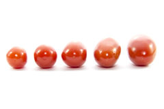 Mini fresh tomato size arrange straight line Royalty Free Stock Image